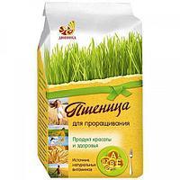 Пшеница  Дивинка для проращивания 500г
