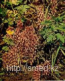 Петров крест (царь трава, корень) , 50 грамм, фото 4