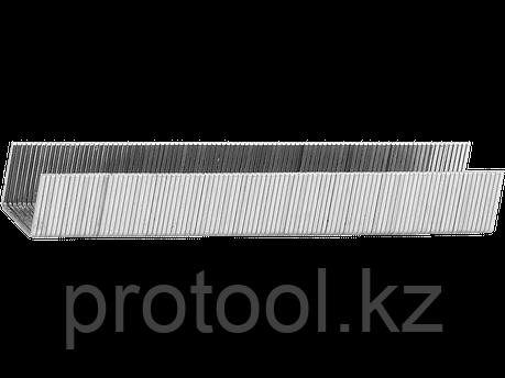 "Скобы тип 53, 10 мм, особотвердые, STAYER ""PROFESSIONAL"", 1000 шт, фото 2"