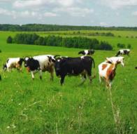 Кормовые добавки и лекарственные средства для домашнего скота