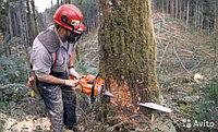 Обрезка деревьев, фото 1