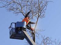 Валка деревьев, фото 1