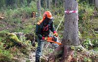 Услуги по спилу деревьев, фото 1