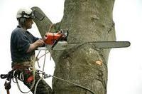 Снос деревьев, фото 1