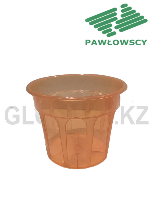Pawlowscy Karo17