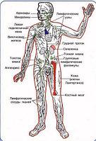 Для Иммунной системы