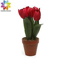 Декоративные тюльпаны в горшке 36 см (разных цветов)
