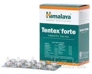 ТЕНТЕКС ФОРТЕ (TENTEX FORTE) Himalaya