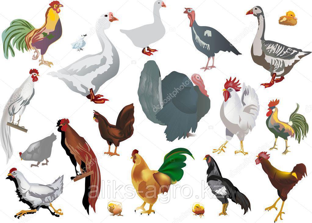 БМВД (белково-витаминно-минеральная добавка) для птицы
