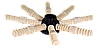 Нижняя лучевая расред. система, 36, 63 мм