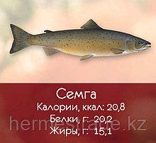 Семга (5-6; 6-7; 7-8; 8-9; 9+)
