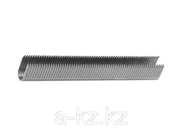 Скобы кабельные, ЗУБР ЭКСПЕРТ , закаленные, тип 36, 14мм, 1000шт, 31612-14_z01, фото 2