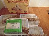Зерна пшеницы с комплектами для проращивания 5шт по 50гр, 250г, фото 3