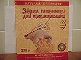 Зерна пшеницы с комплектами для проращивания 5шт по 50гр, 250г, фото 4