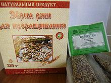 Зерна ржи с комплектами для проращивания 5шт по 50гр, 250г