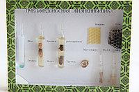 Коллекция Пчела медоносная