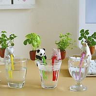 Набор для выращивания (без стакана, с трубкой).