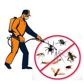 Дезинсекция (уничтожение насекомых)