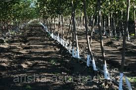Основные понятия по уходу за садами. Защита растений.