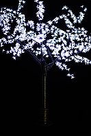 Дерево Сакура, фото 3