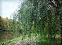 Cветодиодное дерево Ива, фото 5