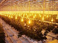 Освещения складов, освещение баз, освещение промышленных объектов, освещение теплиц, фото 4
