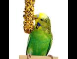 Лакомства для волнистых и средних попугаев