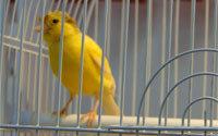 Лакомства для канареек и экзотических птиц