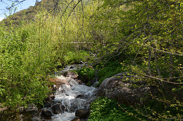 По нашему участку протекает чудесный ручей с ледяной горной водой. Наше главное украшение и спасение в летнюю жару.