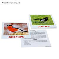 Обучающие карточки «Птицы»