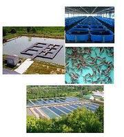 Рыбные комплексы, садковые хозяйства, УЗВ