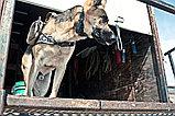 Собачья камера K-9 Chest Mounted Camera, фото 3