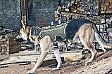 Камера для собак K-9 Back Mounted Camera, фото 4