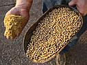 Услуги по экструдированию пшеницы, сои, зерноотходов , ячменя и др, фото 2