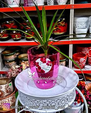 Пластиковое Кашпо Орхидея. Цвет: Фиолетовый. Объем: 1л., фото 2