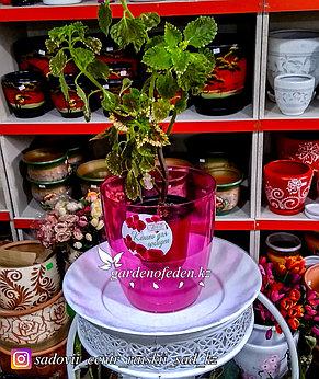 Пластиковое Кашпо Орхидея. Цвет: Фиолетовый. Объем: 1.5л, фото 2