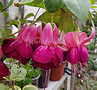 Heiko Fuhrman /подрощенное растение