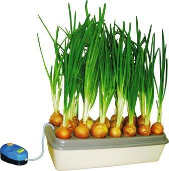"""""""Луковое счастье""""  Домашняя установка для выращивания зеленого лука"""
