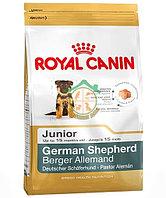 GERMAN SHEPHERD щенки, 12 кг