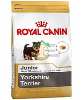 YORKSHIRE Terrier 28, 7.5 кг