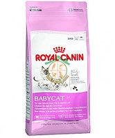 Babycat 2 kg