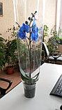 Синяя орхидея!, фото 2