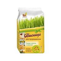 Пшеница Дивинка для проращивания 200г