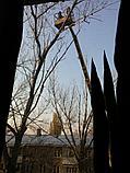 Спил обреска кронирование деревьев, фото 3
