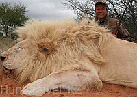 Сафари (Охота в Южной Африке)