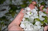 Антиградовая защитная сетка для садов и виноградников, фото 4