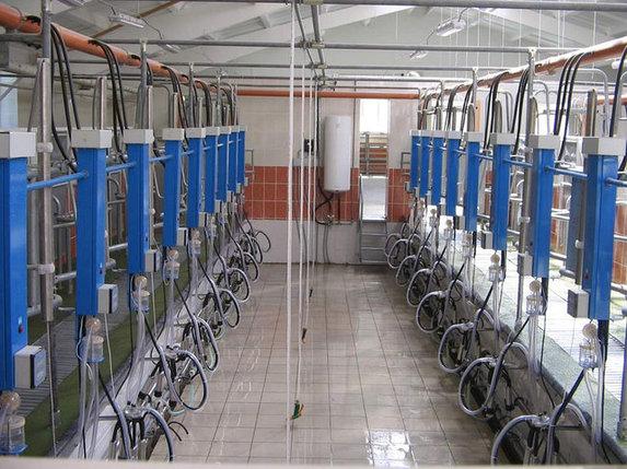 Установка доильная автоматизированная, фото 2