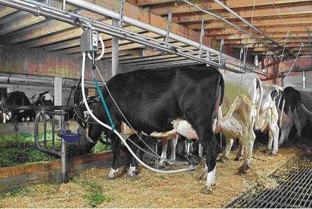 Установки доильные с молокопроводом для машинного доения коров в стойлах 100 голов, фото 2