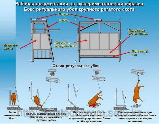 Комплект оборудования по убою скота, фото 2