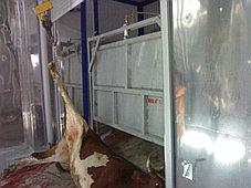 Комплект оборудования для убойного цеха, произв - 30 голов КРС/смену, фото 3